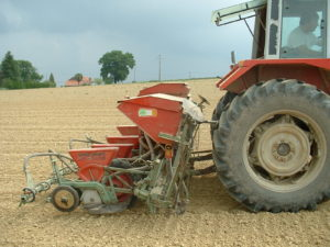 Semis de Haricot-Maïs du Béarn