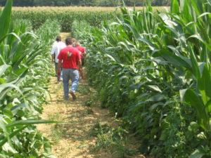 Visites des parcelles de Haricot-Maïs du Béarn